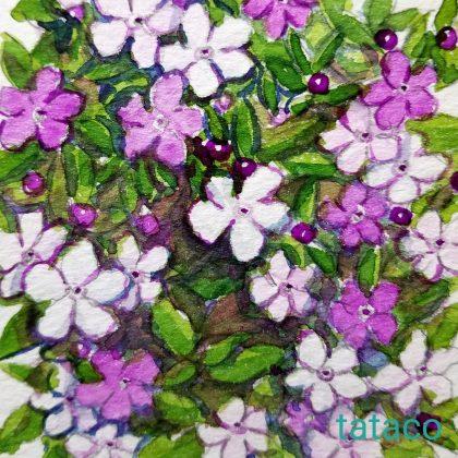 バンマツリ 花 言葉 ニオイ バンマツリを楽しむ